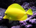 Tropical Fish Plr Articles v2