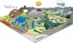 Ecosystems Plr Articles