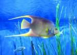 Tropical Fish Plr Articles