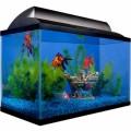 Setting Up Your Home Aquarium Plr Articles