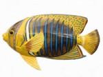 Tropical Fish Plr Articles v3