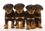 Dog Breeds Plr Articles