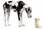 Dog Breeds Plr Articles v2