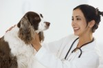 Pet Health Insurance Plr Articles