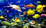 Tropical Fish Plr Articles v4