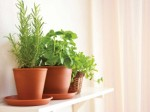 Indoor Gardening Tips And Hints Plr Articles