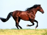Horses Plr Articles