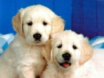 Dogs And Puppies Plr Articles