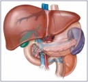 Liver Detox Plr Articles
