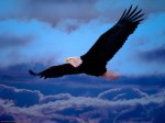 Flying Plr Articles