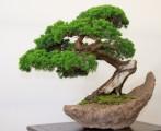 Bonsai Plr Articles v2