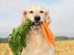Dog Diet Plr Articles