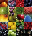 Antioxidants Plr Articles v3