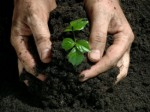 Natural Fertilizer Plr Articles