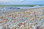 Sanibel Island Plr Articles