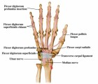 Carpal Tunnel Plr Articles v2