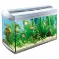 Aquarium Plr Articles v3