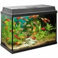 Aquariums Plr Articles