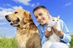 Dog And Cat Plr Articles