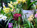 Orchids Niche Business Plr Articles