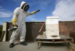 Beekeeping Niche Business Plr Articles