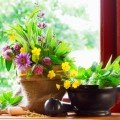 Indoor Gardening Plr Articles