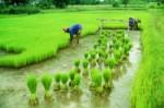 Agriculture Plr Articles
