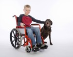 Service Dogs Dog Training Plr Articles
