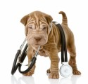 Dog Health And Medical Plr Articles