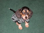 Miscellaneous Topics on Dogs Plr Articles