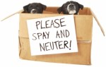 Spay Neutering Dog Plr Articles