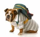 Dog Travel Plr Articles
