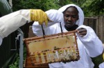 Bee Keeping Plr Articles