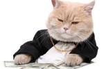 Craigs list Profits Unleashed Plr Articles