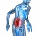 Chiropractic Care Pain Plr Articles