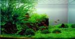 Freshwater Aquariums Plr Articles