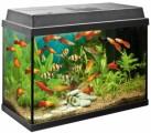Aquarium Plr Articles