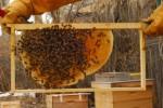 Bee Keeping Plr Articles v2