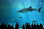 Aquarium Plr Articles v4