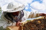 Beekeeping Plr Articles