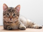Cats Plr Articles V4