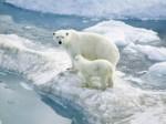 Global Warming Plr Articles V8
