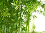 Bamboo Plr Articles