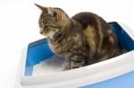 Cat Litters Plr Articles