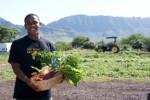 Farms Plr Articles