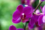 Orchids Plr Articles