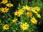 Perennials Plr Articles