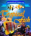 Introduction To Tropical Fish Plr Ebook