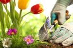 Gardening For Beginnners Plr Autoresponder Email Series