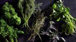 Arc Herbs Plr Articles